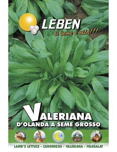 VALERIANA D'OLANDA S.GR. LBO