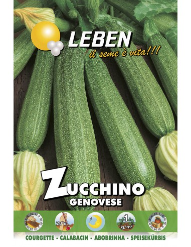 ZUCCHINO GENOVESE  LBO