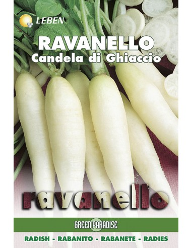 RAVANELLLO CANDELA GHIACCI LBO