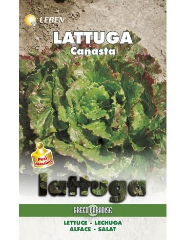 LATTUGA CANASTA  LBM