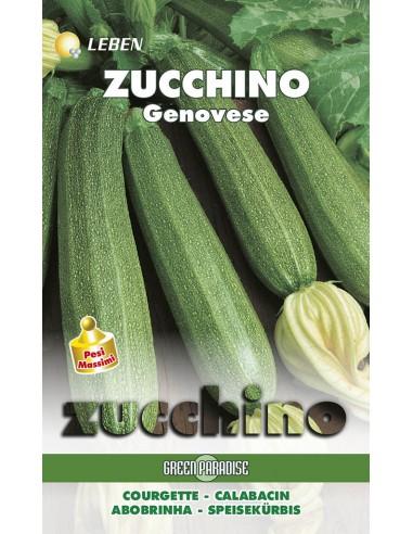 ZUCCHINO GENOVESE  LBM