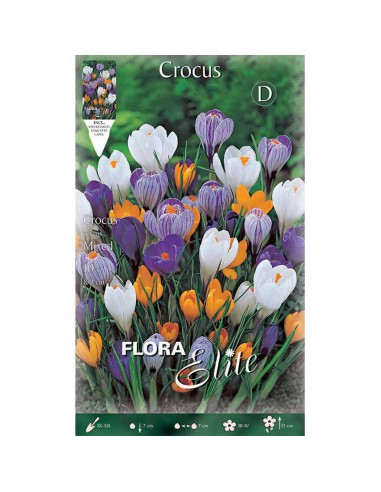 CROCUS VERNUS  MIXED
