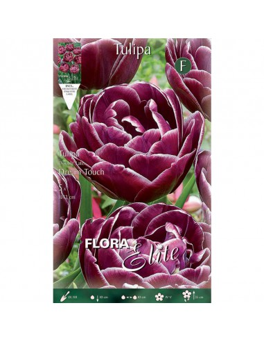 TULIPA DOUBLE LATE DREAM TOUCH