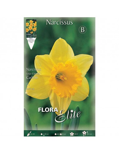 NARCISSUS LARGE-CUPPED CARLTON