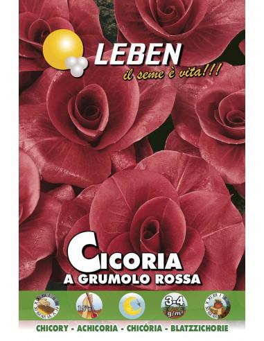 CICORIA GRUMOLO ROSSA  LBO