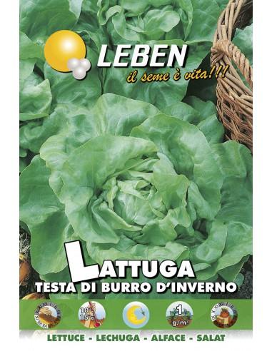 LATTUGA TESTA BURRO/INV. LBO