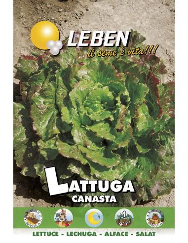LATTUGA CANASTA  LBO