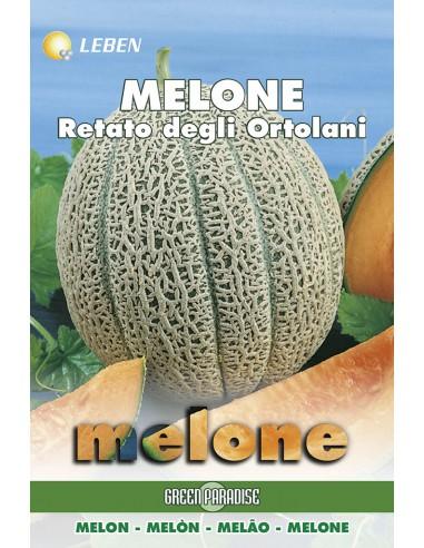 MELONE RETATO ORTOLANI LBO