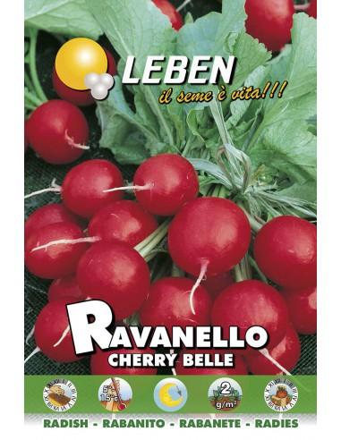 RAVANELLO CHERRY BELLE LBO
